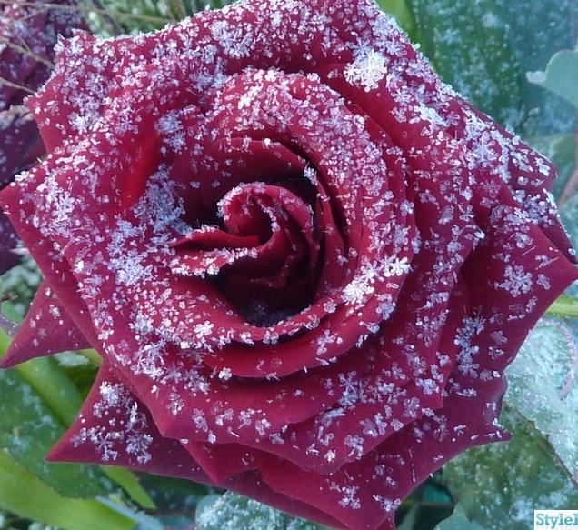 351332-blommor